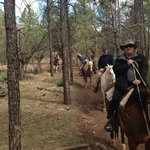 Horse Back Riding in Pinetop