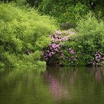 Grounds of Dunham Massey (10 min walk)