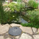 koi pond in courtyard