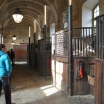 You are invited to tour the stables after the show.