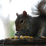 A friend enjoys breakfast near the outdoor dining deck