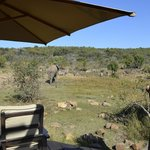 Foto de Makweti Safari Lodge
