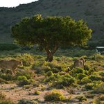 Sanbona Wildlife Reserve - Tilney Manor, Dwyka Tented Lodge, Gondwana Lodgeの写真