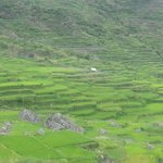 Some Rice Terraces at Sagada
