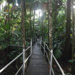 Daintree Wilderness Lodge resmi