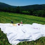 Field picnic with wine and cheese