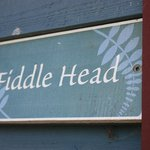Fiddle Head room