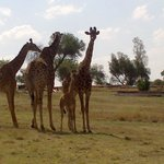 Heia Safari Ranch의 사진