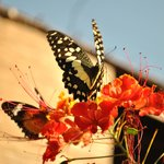 Photo of Banteay Srey Butterfly Centre