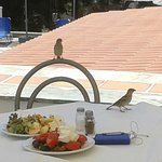 Photo de Holidays In Evia Resort