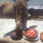 """Hey that's my lunch!"" Abduls Bar - when Abdul's in the kitchen the locals sneek in for leftover"