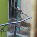 monkeys favorite snack...electric cable
