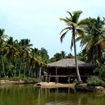 puvar island, kerala backwater view