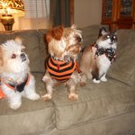 Our pets, Molly, Max and Phoebe