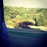 Deer that came by the yurt every morning and evening.