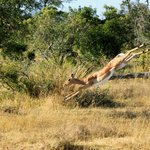 Londolozi Private Game Reserve의 사진