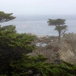Biked up to the Lone Cypress on 17 mile drive
