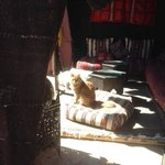 friendly riad cat