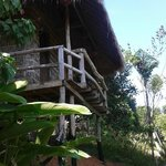 Foto di Tree Top Bungalows