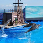 Dolphin Show at ocean theater (100396566)
