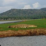 Crocodile in kabini river