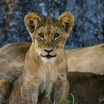Foto de Little Kwara Camp - Kwando Safaris