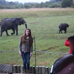 There was always action around the main areas: we got to see and take pictures of some elephants