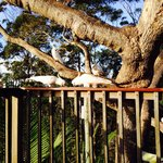 Foto di Tamborine Mountain Bed & Breakfast