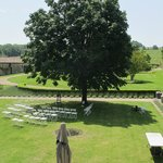Lawn laid out for wedding ceremony