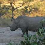 Photo of Nhongo Safaris - Day Tours