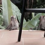 A close up with playful macaques at the balcony
