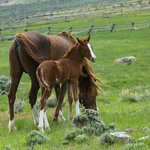 Beautiful foals every Spring