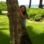 On the Kauai Sands Hotel grounds