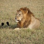 صورة فوتوغرافية لـ ‪andBeyond Grumeti Serengeti Tented Camp‬