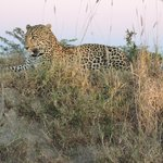 Foto van Savanna Private Game Reserve