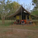 Photo de Mahoora Tented Safari Camp - Udawalawe