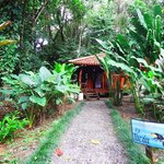 Bilde fra Playa Nicuesa Rainforest Lodge