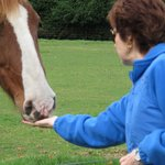 Cathy feeds the horse some dandelion