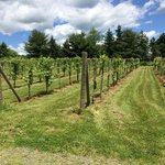 The Vineyards at Connecticut Valley Winery