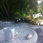 Enjoying morning coffee with duck family.