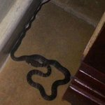 Snake in our bedroom