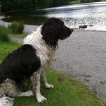 Great doggy walks around Grasmere Lake