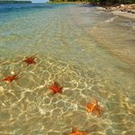 From our hotel you can book great excursions in the area such as to Starfish Bay