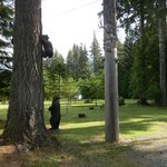 Foto de Sayward Valley Resort Fisherboy Park