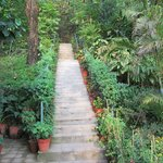steps surrounded by greenery