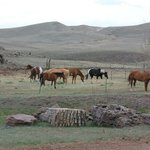 Photo of Badger Creek Guest Ranch