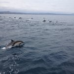 Tons of dolphins in a pod