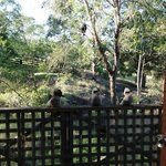 Kookaburras sitting on the verandah - Lilypond Cabin 1