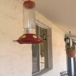 hummingbirds nearly buzzed out my eyes! :)