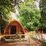 Our pod in the woods